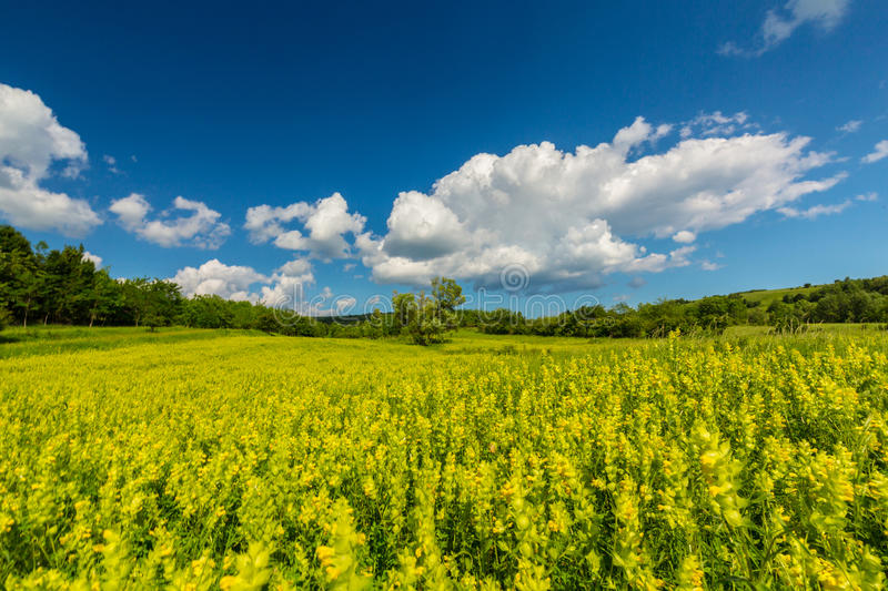 Pretty scenery with wild meadow and yellow flowers in spring stock download pretty scenery with wild meadow and yellow flowers in spring stock image image of mightylinksfo Gallery