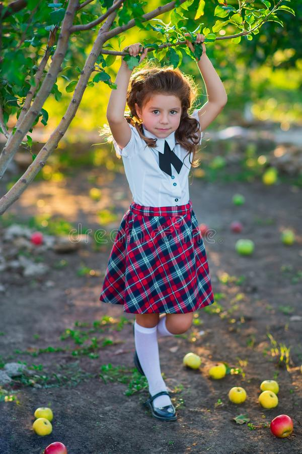 A pretty schoolgirl near a tree in the garden collects a crop of apples. Childhood. Education. The concept of advertising and peop royalty free stock photography