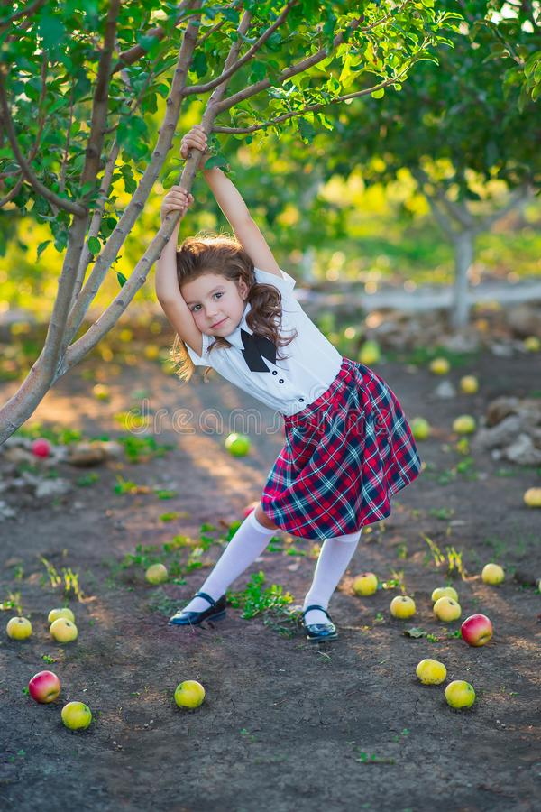 A pretty schoolgirl near a tree in the garden collects a crop of apples. Childhood. Education. The concept of advertising and peop royalty free stock image