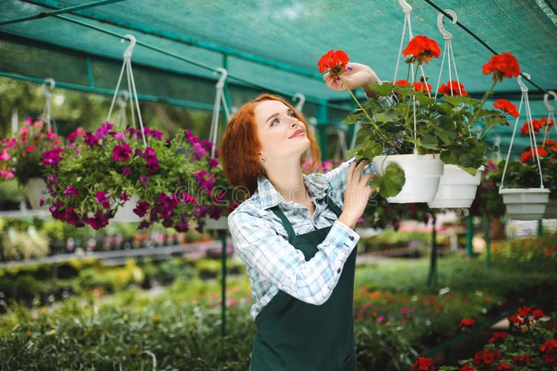 Pretty smiling redhead florist in apron working with flowers. Young lady standing with flowers and joyfully looking aside royalty free stock images