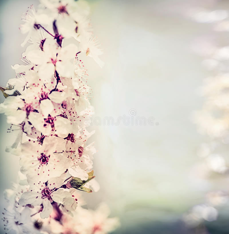 Pretty springtime floral background with cherry blossom in pastel color with bokeh lighting, floral stock photo