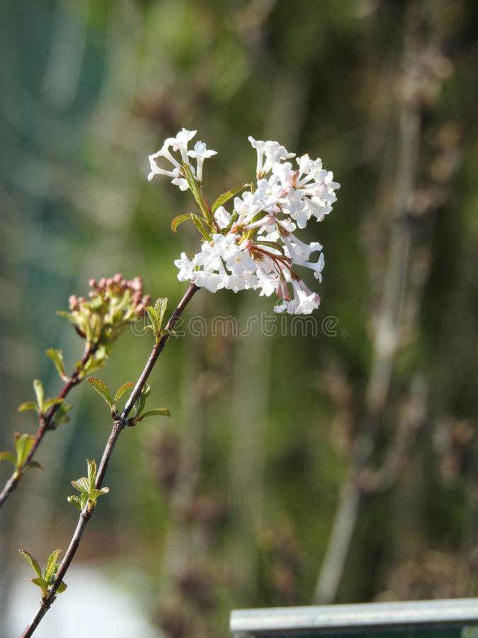 Pretty stem with bloomy and delicate flower. S on blurred gray background stock image
