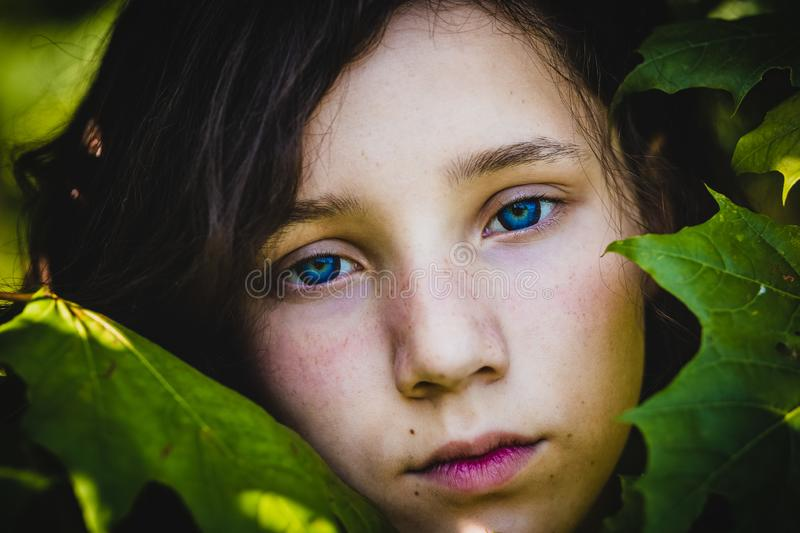 the face of a pretty teen girl among maple leaves, close-up. stock photography