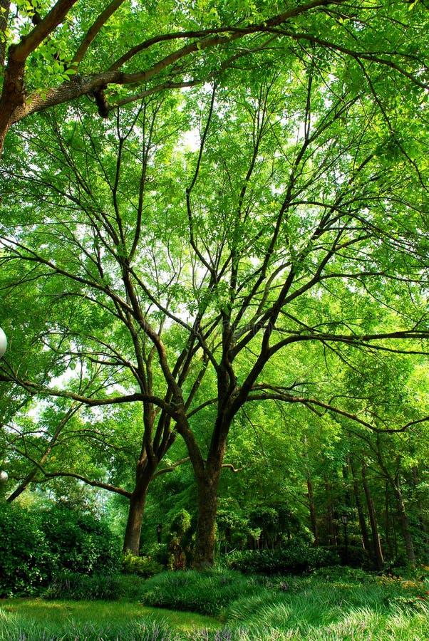 Pretty Trees Stock Image