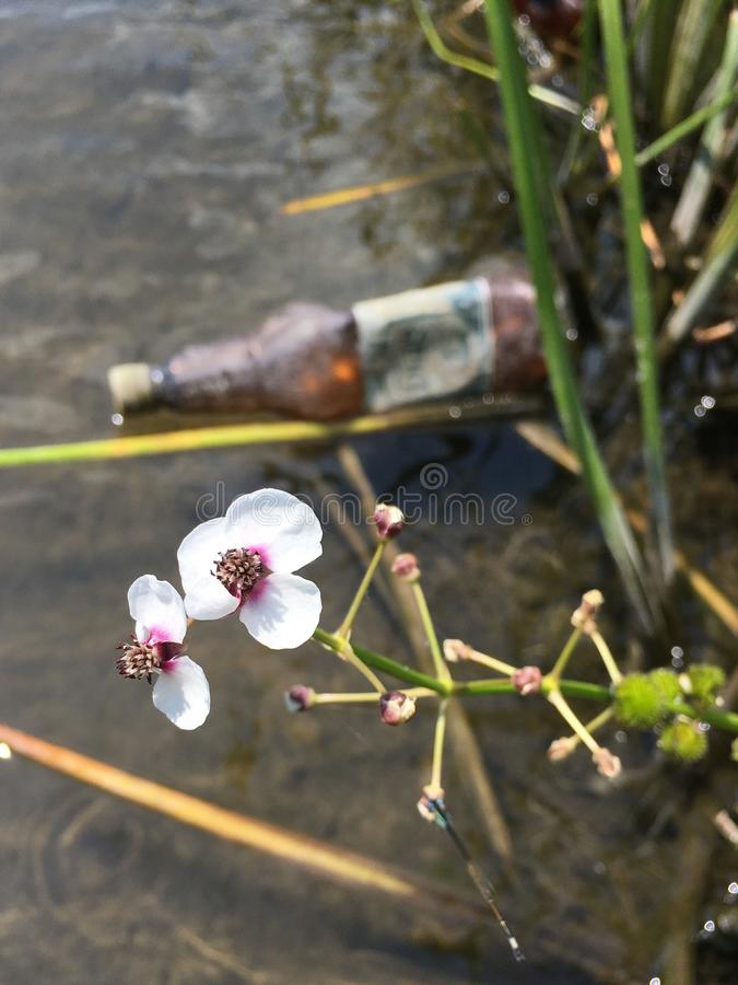 Beautiful nature and plastic water pollution royalty free stock photos