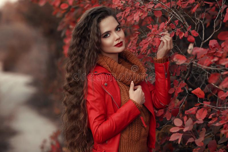 Pretty Woman autumn outdoor portrait. Young beautiful brunette i. N leather jacket and warm woolen knitted sweater posing in red leaves park. Attractive girl in royalty free stock image
