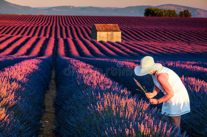 Pretty woman in fields of lavander stock images