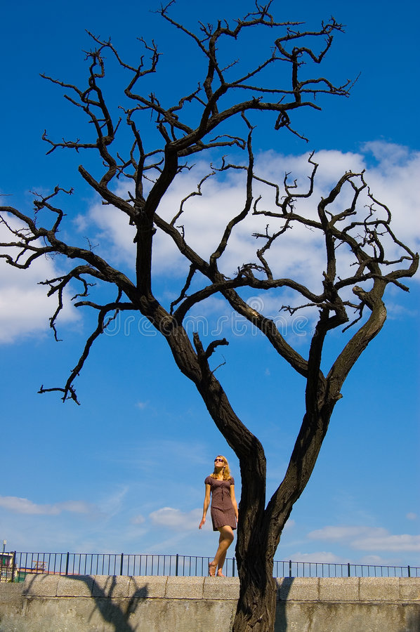 Pretty woman and leafless tree. Woman and leafless dry tree stock photography