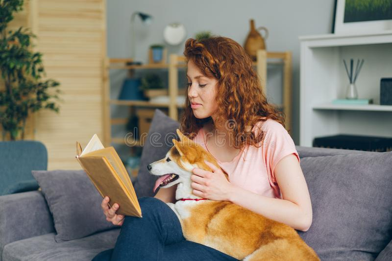 Pretty woman reading book smiling stroking shiba inu puppy on sofa at home royalty free stock image