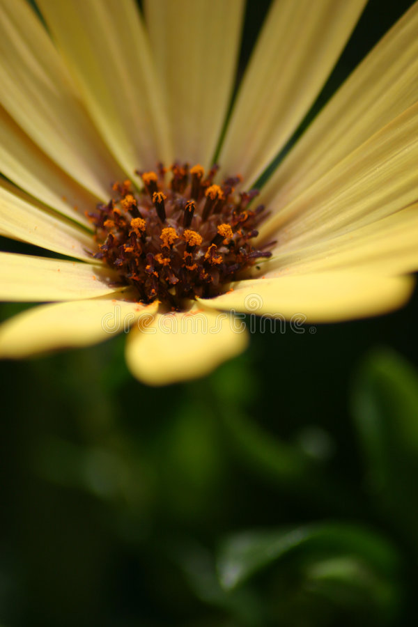 Download Pretty yellow flower stock photo. Image of macro, flora, green - 8082