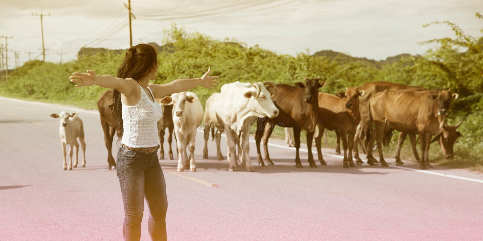 Pretty young Asian woman enjoy summer day with cow on a road. royalty free stock photos