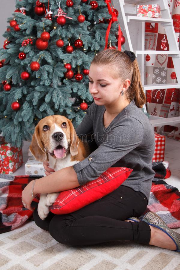 Pretty young woman with beagle dog sit near decorated New Year tree royalty free stock photo