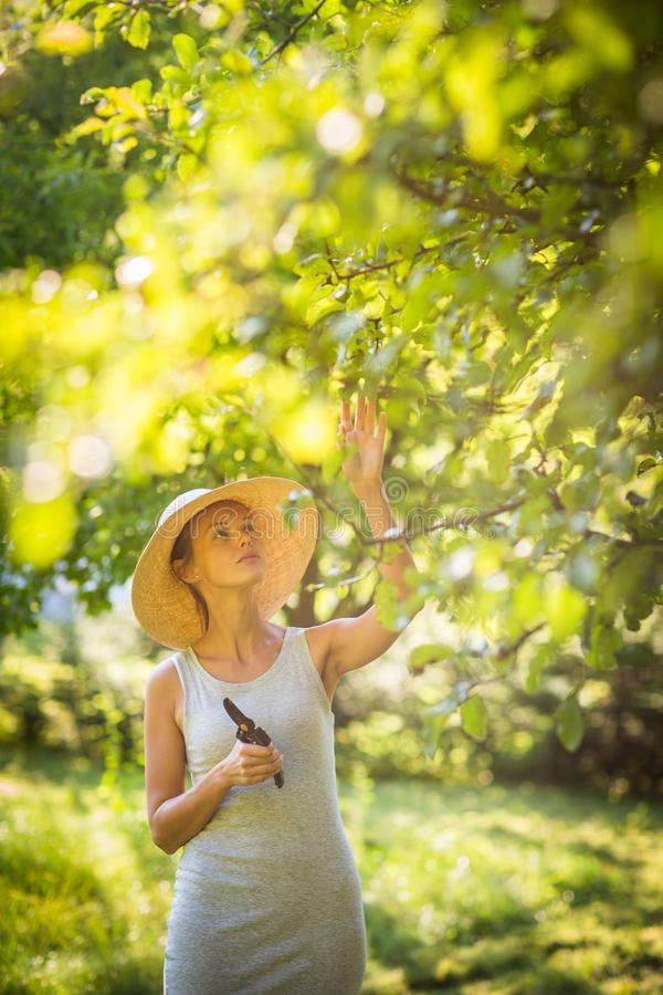 Pretty, young woman gardening in her garden royalty free stock photography