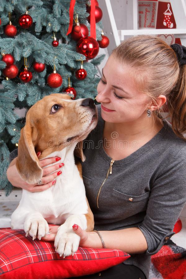 A pretty young lady hugging cute beagle dog as they are looking at each other on the New Year eve royalty free stock photos