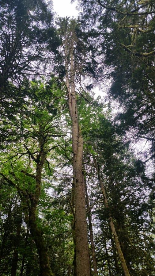 Pretzel κρατικό πάρκο βουνών δέντρων squak στοκ εικόνες