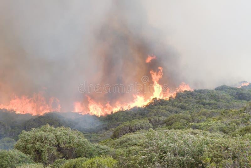 Prevelly Strand Bushfire lizenzfreie stockbilder