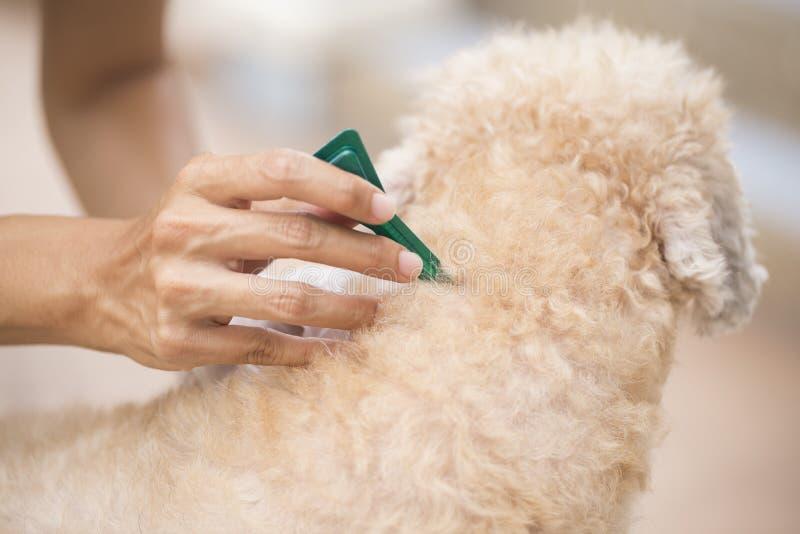 Prevenção do tiquetaque e da pulga para um cão fotografia de stock royalty free