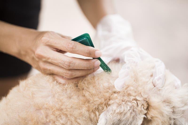 Prevención de la pulga para un perro imágenes de archivo libres de regalías