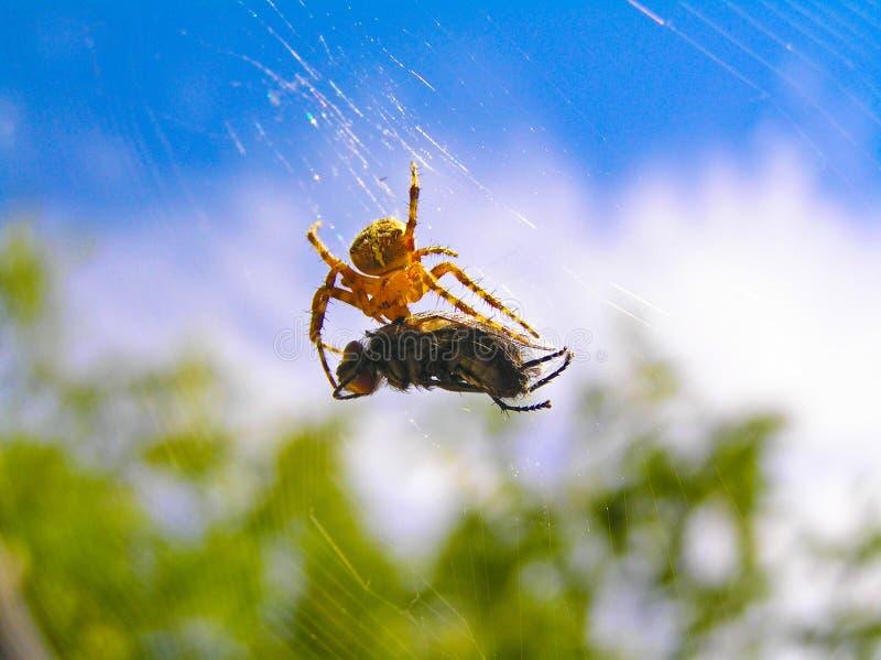 prey хищника стоковая фотография