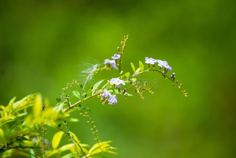 Prezent natura greenfield Życie i piękno zdjęcia stock