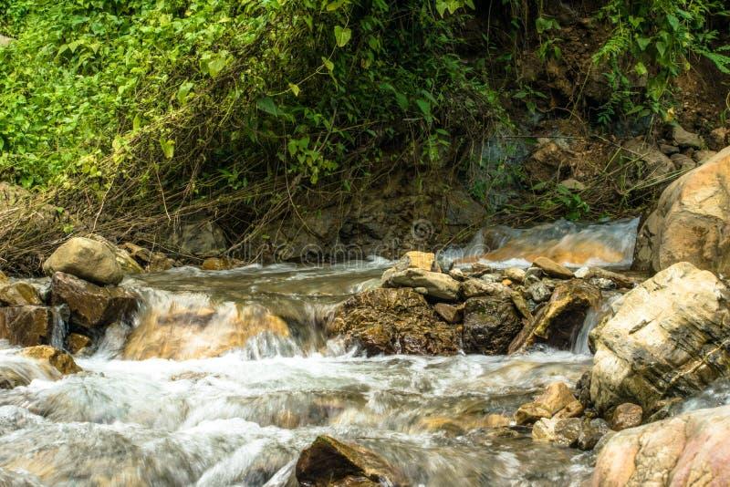 Prezent natura greenfield Życie i piękno fotografia royalty free