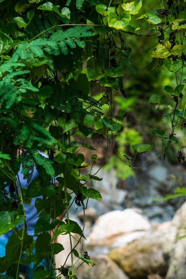 Prezent natura greenfield Życie i piękno obrazy royalty free