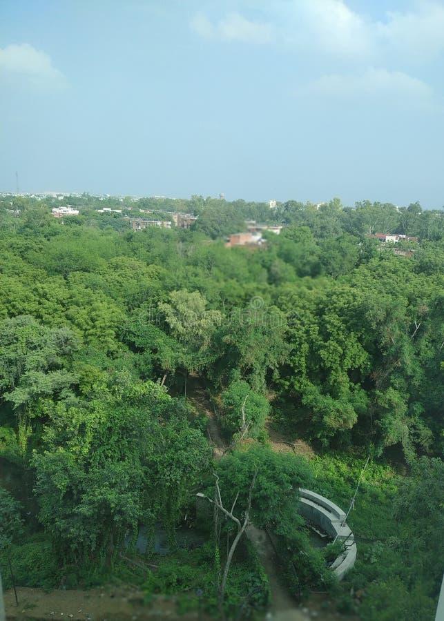 Prezent natura Naturalni lasy obraz royalty free