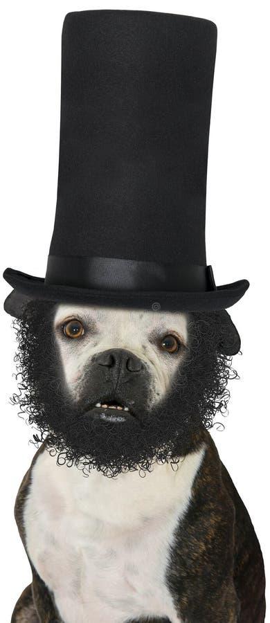 Prezydenta Abraham Lincoln pies Odizolowywający zdjęcie royalty free