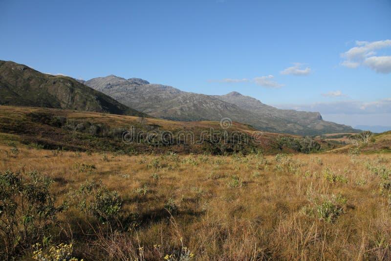 Priarie d'or avec le paysage de montagne image stock
