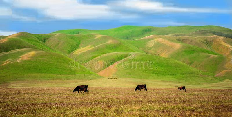 Priaries de California, cielos azules billowing las nubes, Rolling Hills verde enorme, y campos de oro para pastar encendido imágenes de archivo libres de regalías