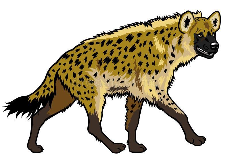 Prickig hyena royaltyfri illustrationer