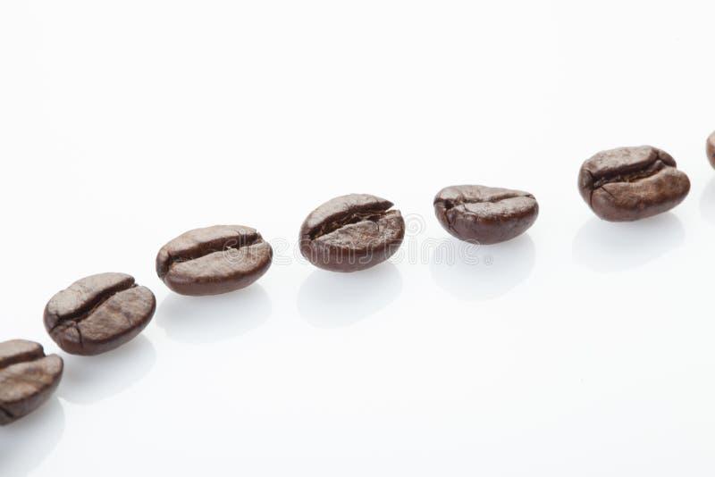 Prickig linje av kaffebönor royaltyfri foto