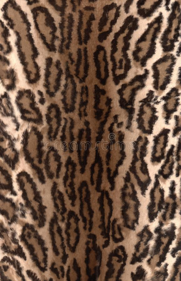 Prickig pälstextur för naturlig leopard Slut upp leopardhudbakgrund arkivbilder