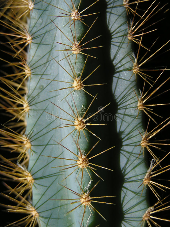 Prickles del cactus fotografia stock