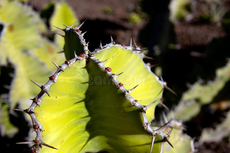 Download Prickly Cactus On The Background Stock Photo - Image: 12354908