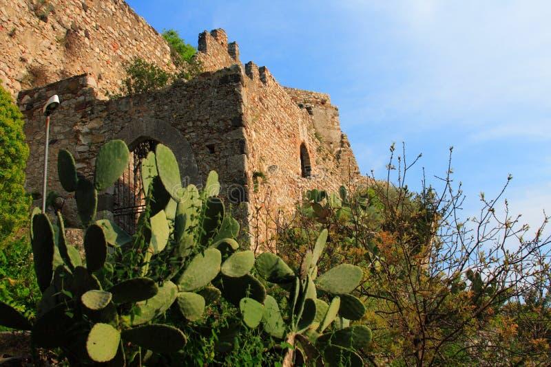 prickly fästningpear fotografering för bildbyråer