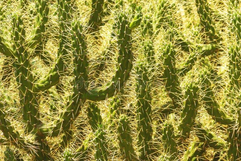 Prickly, green cactus, close up. Prickly, green cactus, close up stock image