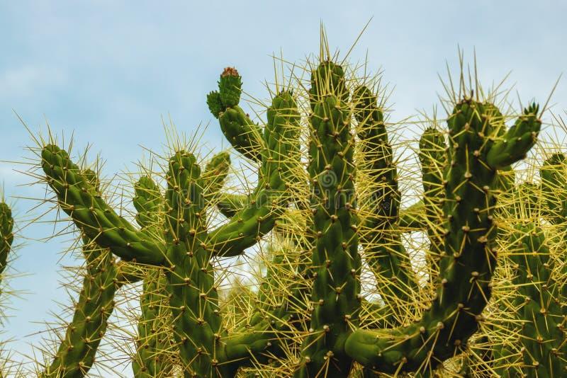 Prickly, green cactus, close up. Prickly, green cactus, close up stock photos