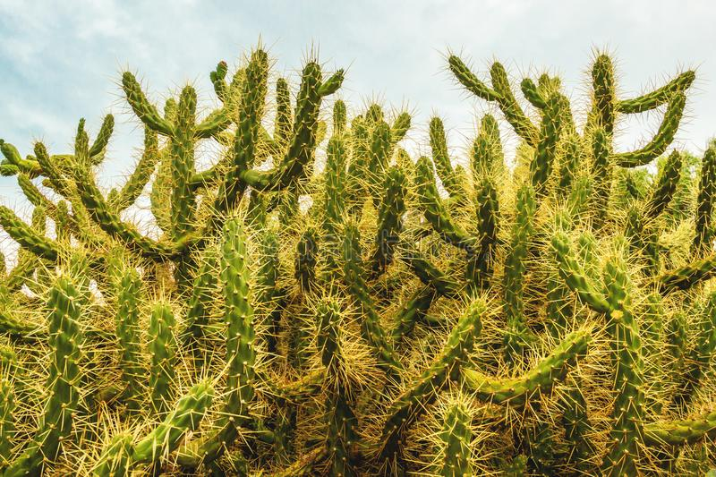 Prickly, green cactus, close up. Prickly, green cactus, close up stock photography
