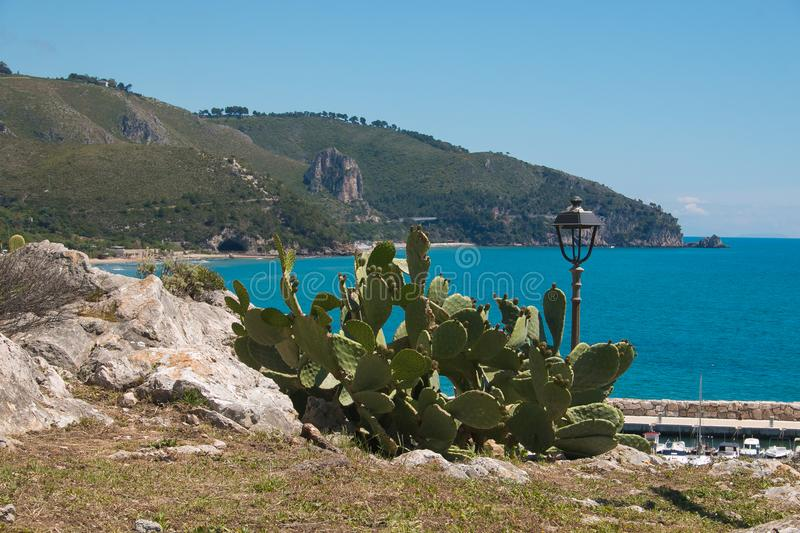 Prickly pear cactus near the sea of Sperlonga, Lazio royalty free stock photos