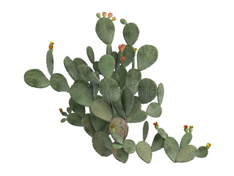 Prickly_pear_ (Opuntia_ficus_indica) ilustración del vector