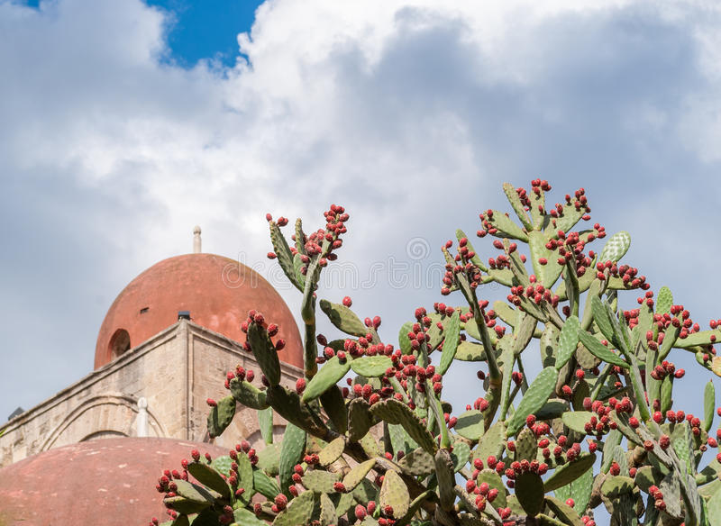 Prickly pears plant with fruits; red dome of a church in background (Palermo, Sicily) royalty free stock photo