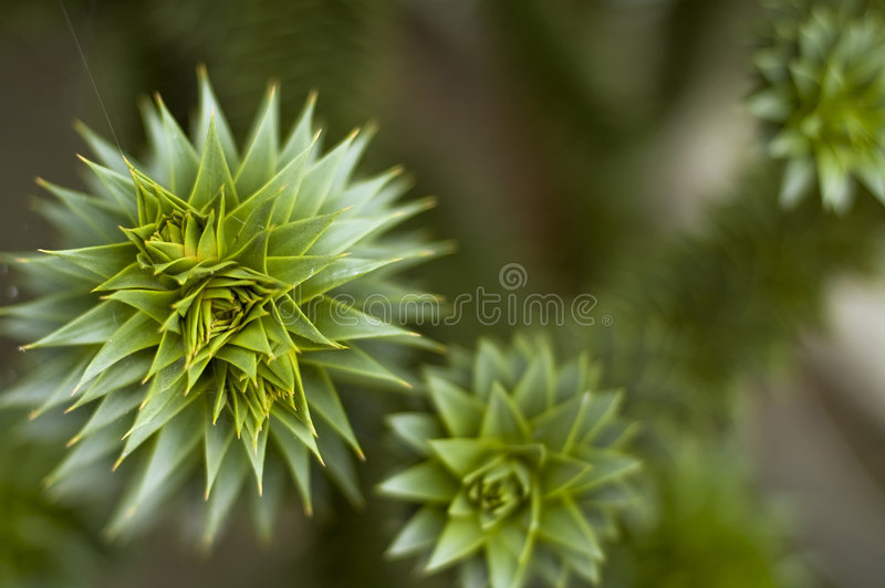 Prickly plant royalty free stock image