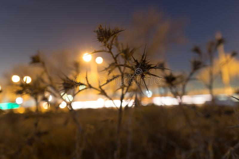 Prickly plant at night outdoors. In the park in nature royalty free stock image
