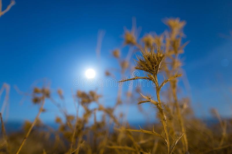 Prickly plant at night outdoors. In the park in nature stock image