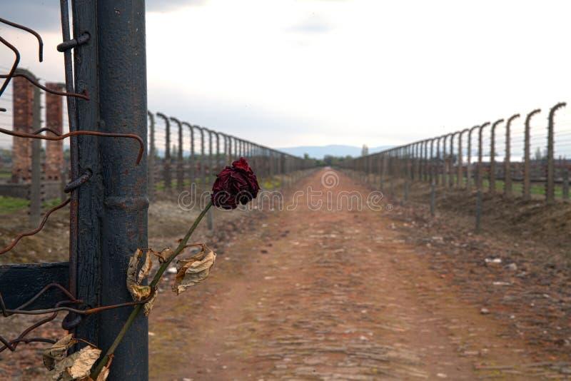 Prikkeldraad rond een concentratiekamp Zijingang van het concentratiekamp Beklemtoond nam en prikkeldraad toe royalty-vrije stock foto's