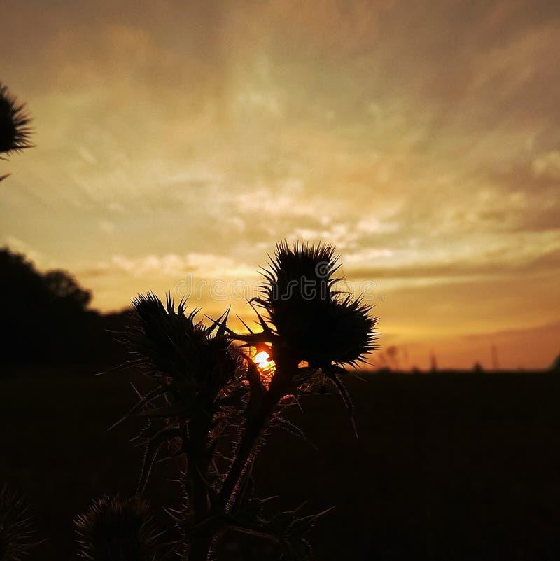 Prikle e por do sol imagens de stock