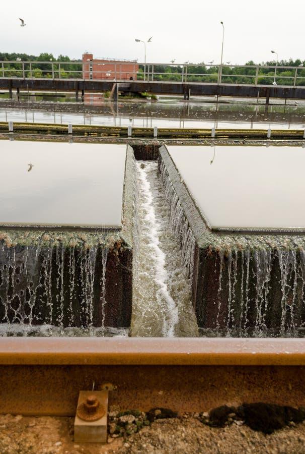 Primär radiell nybyggare på kloakvattenbehandling arkivbild