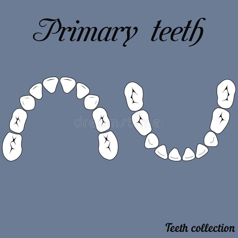 Primära tänder som tuggar yttersida stock illustrationer
