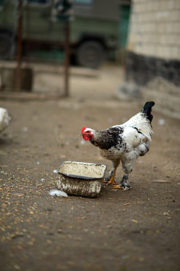 Prima colazione sull'azienda agricola fotografia stock